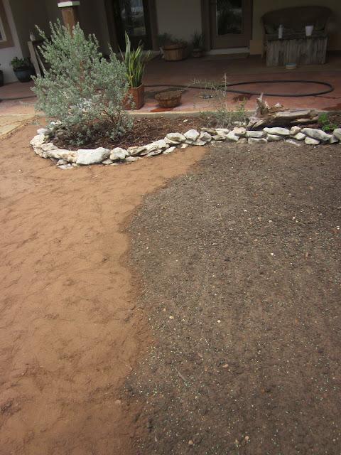 grass seeding front yard