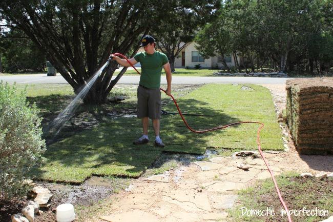 installing sod