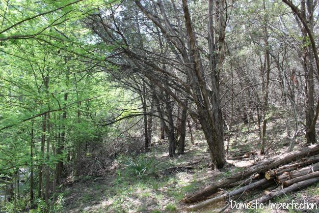cypress vs cedar