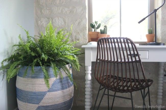 master bedroom plants